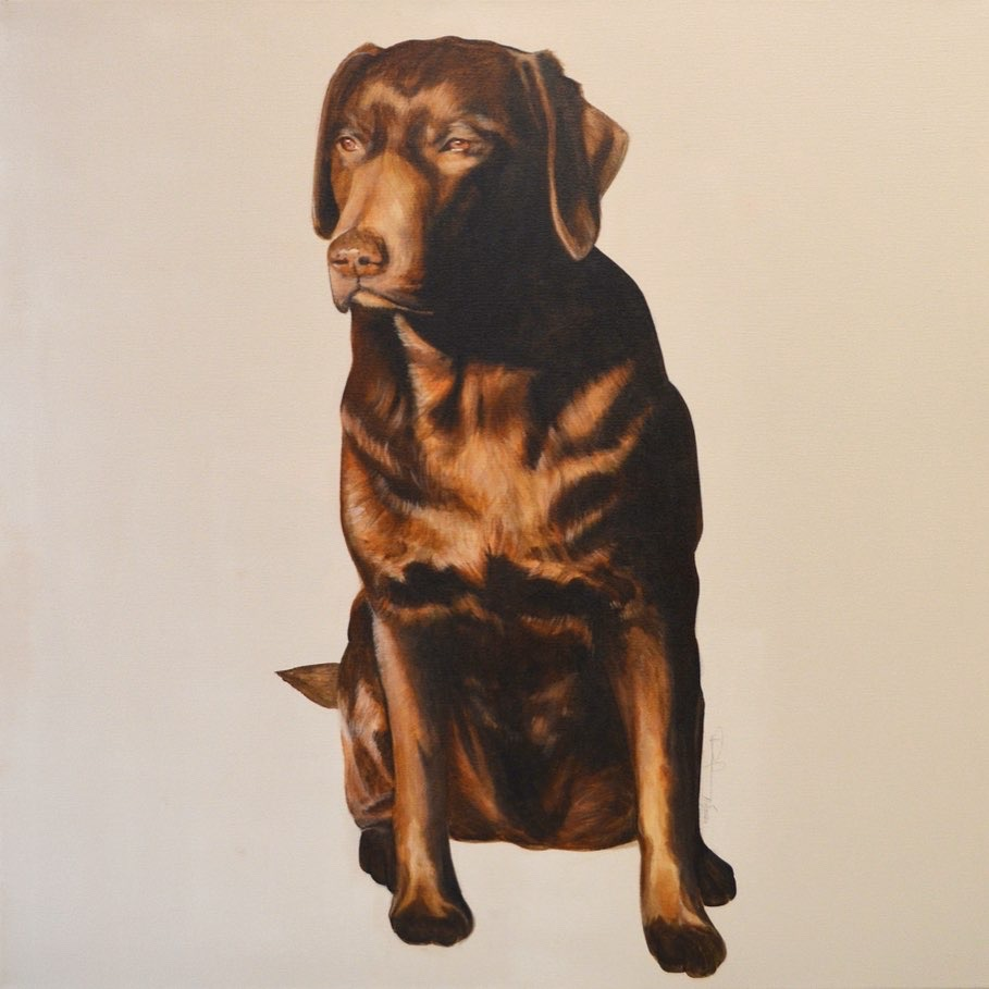 Hundeportrait Paula