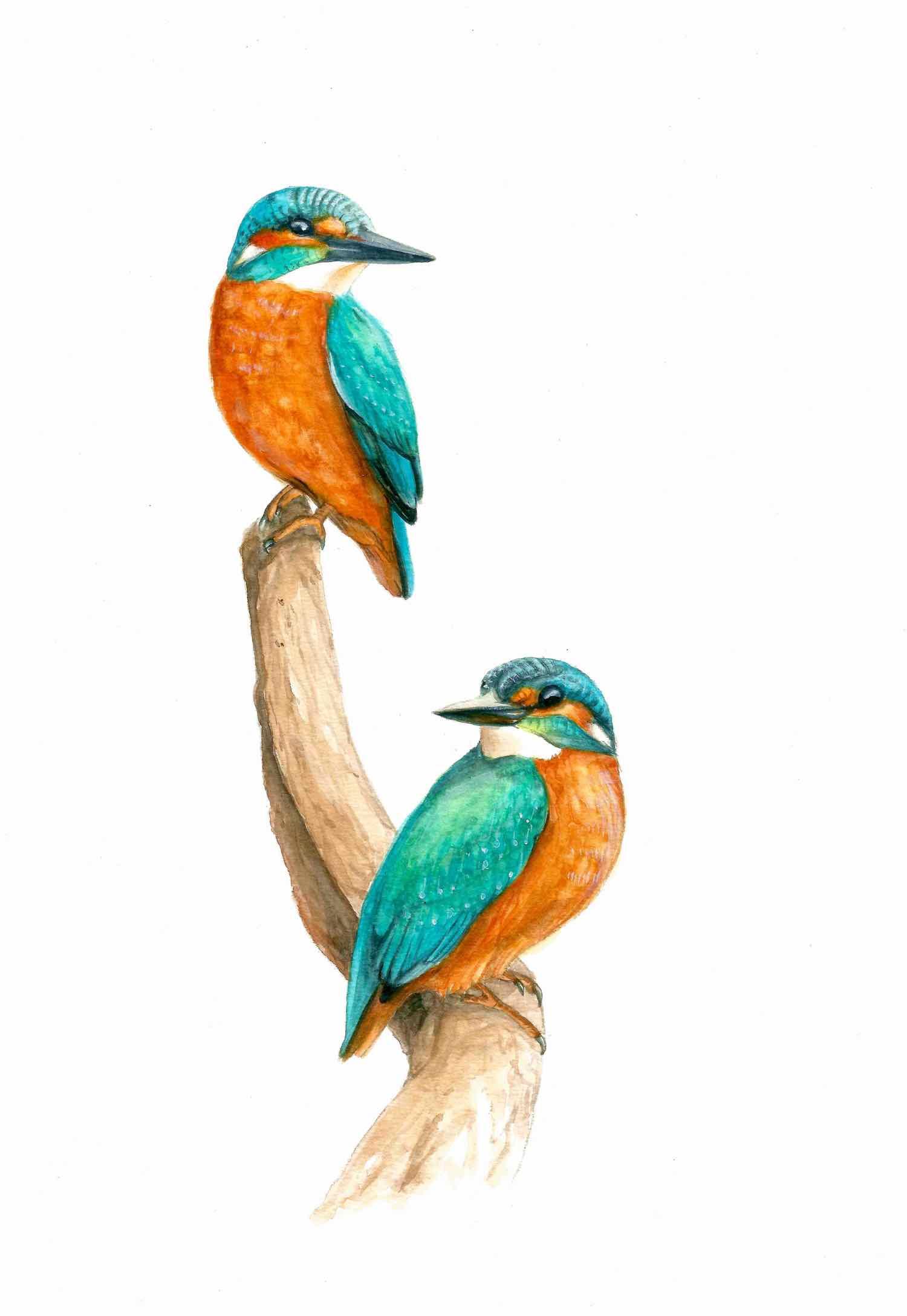 Aquarell Eisvögel © Rita Stern Miltenberg