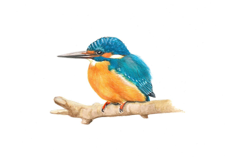 Aquarell Eisvogel © Rita Stern Miltenberg