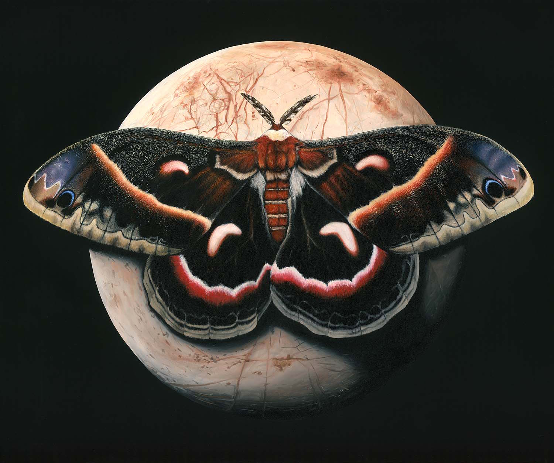 Europa & Riesen Silkwormotte 100x120 cm / Serie: Nachtschwärmer © Rita Stern Kunst Miltenberg