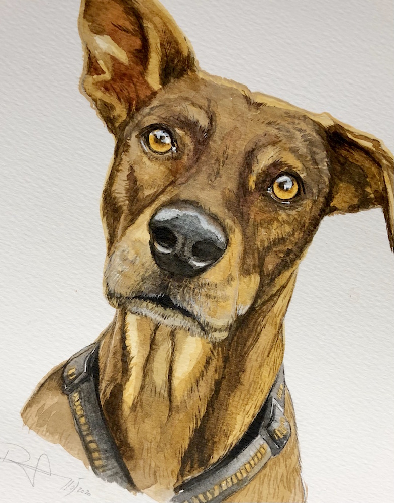 Hundeportrait Auftrag in Aquarell auf Papier 2020 © Rita Stern Miltenberg