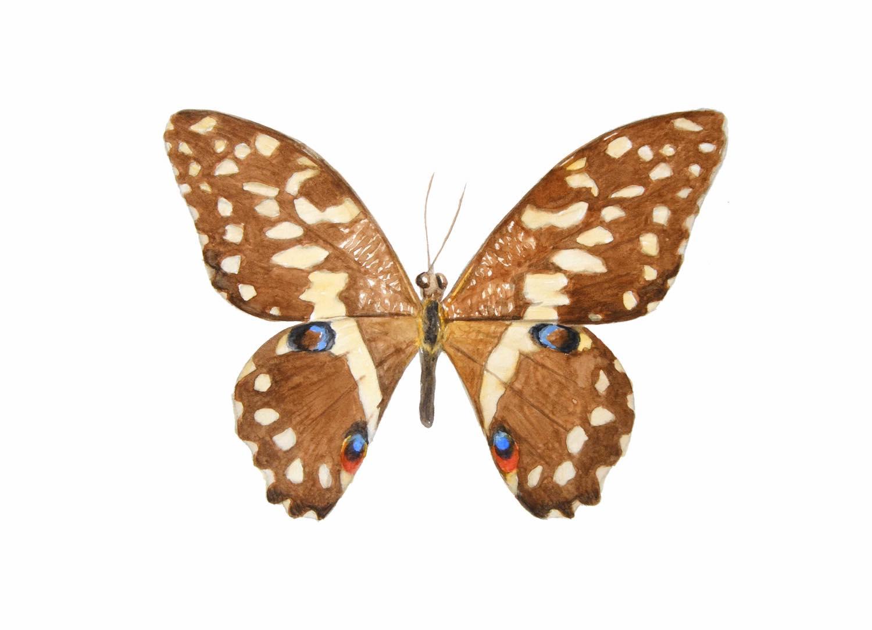 Aquarell Naturstudie Schmetterling © Rita Stern Miltenberg